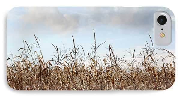 Closeup Of Corn Stalks  IPhone Case by Sandra Cunningham