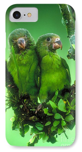Cobalt-winged Parakeets IPhone Case by Art Wolfe