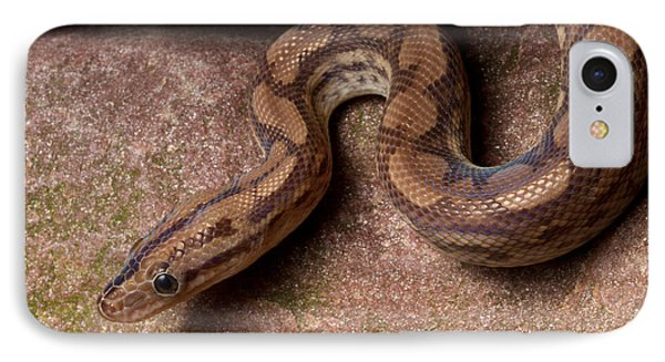 IPhone Case featuring the photograph Colombian Rainbow Boa Epicrates Maurus by David Kenny