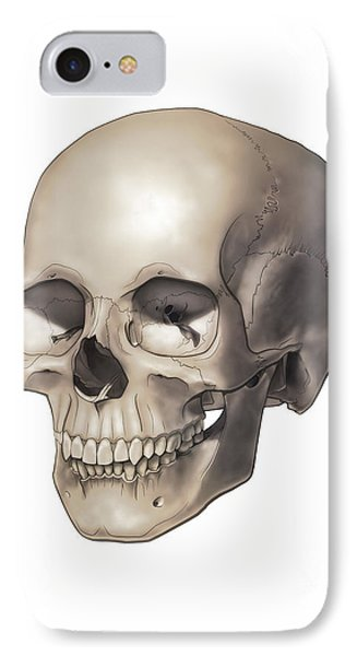 Color Illustration Of A Human Skull IPhone Case by Nicholas Mayeux