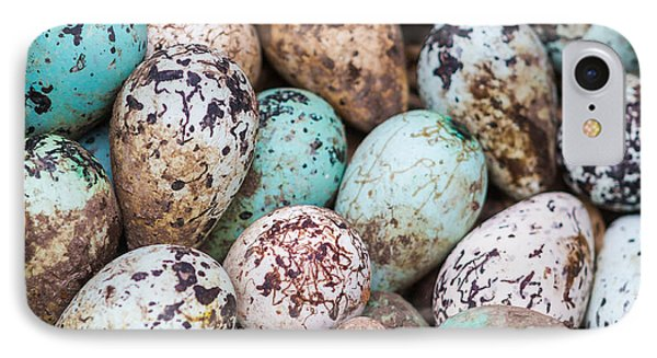Common Guillemot Eggs, Uria Aalge IPhone Case by Panoramic Images