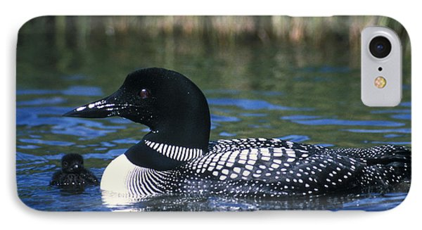 Common Loon IPhone Case by Mark Newman