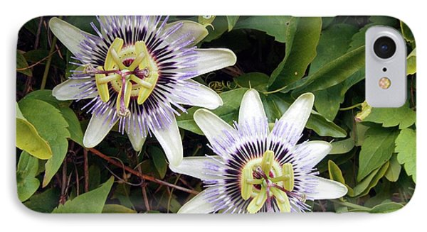 Common Passion Flower IPhone Case by D C Robinson
