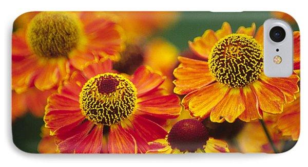Common Sneezeweed Helenium Autumnale IPhone Case by Dr. Nick Kurzenko