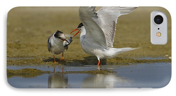Common Tern Sterna Hirundo Phone Case by Eyal Bartov