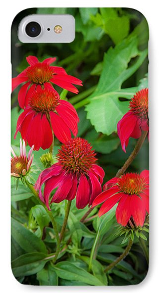 Coneflowers Echinacea Rudbeckia Phone Case by Rich Franco