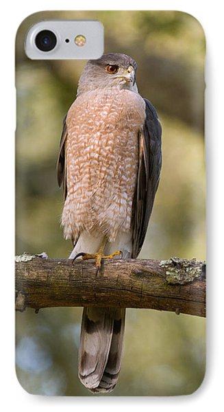 Cooper's Hawk IPhone Case by Doug Herr