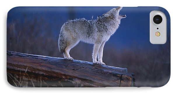 Coyote Standing On Log Alaska Wildlife IPhone Case by Doug Lindstrand
