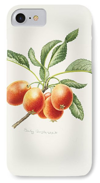 Crab Apples IPhone Case by Sally Crosthwaite