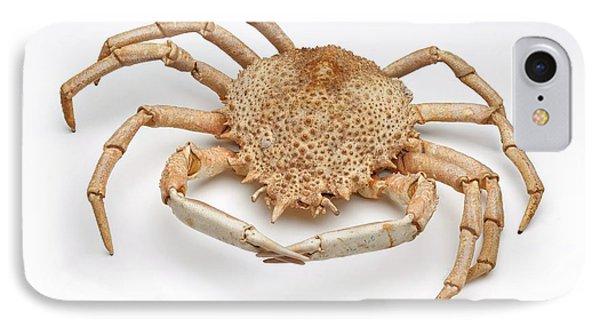 Crab Exoskeleton Specimen IPhone Case