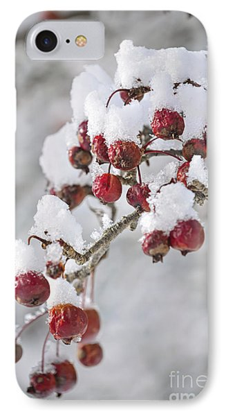 Crab Apples On Snowy Branch IPhone Case