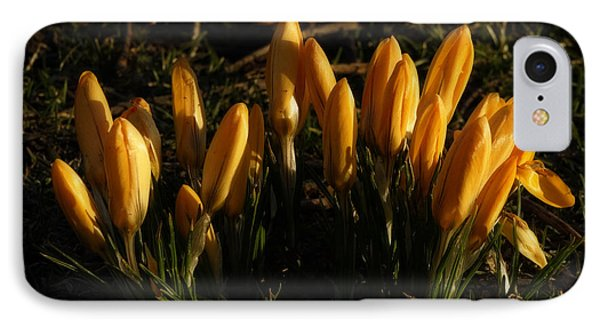 IPhone Case featuring the photograph Crocus by Inge Riis McDonald