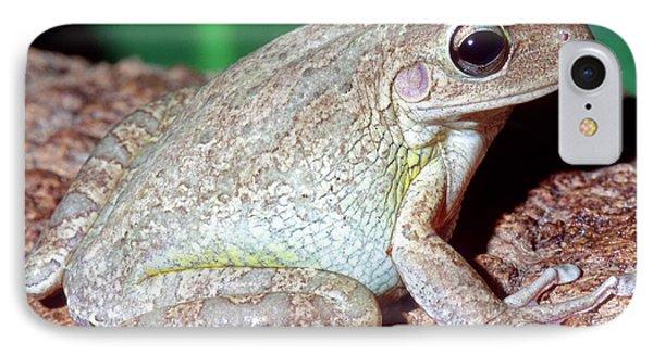 Cuban Tree Frog Osteopilus Phone Case by Millard H. Sharp