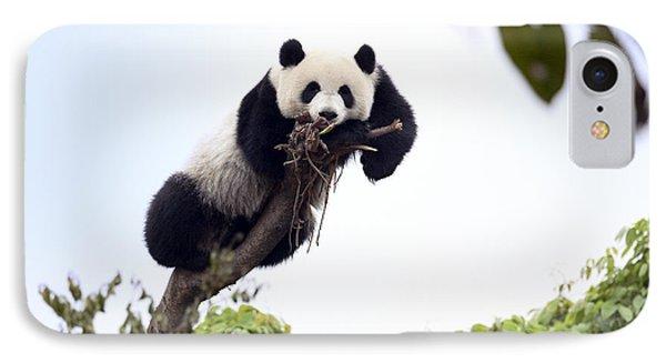Cute Young Panda IPhone Case by King Wu