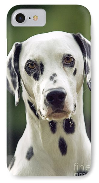 Dalmatian Dog IPhone Case by Jean-Michel Labat