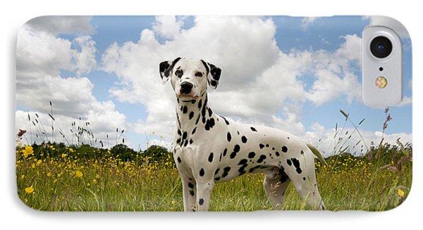 Dalmatian In Field IPhone Case by John Daniels