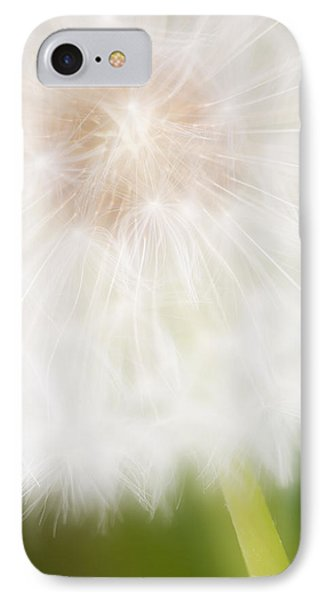 Dandelion Seedhead Noord-holland IPhone Case