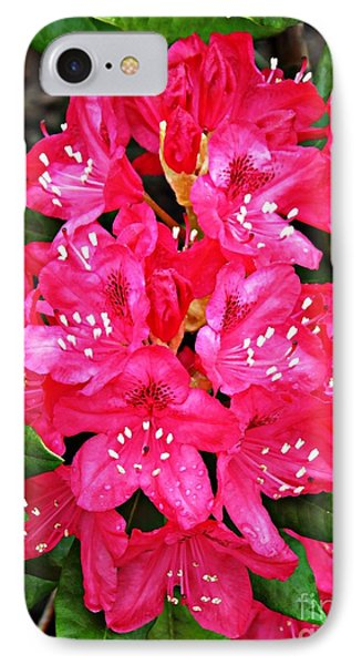 Dark Pink Rhododendron 2 IPhone Case