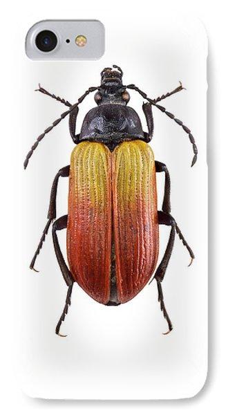 Darkling Beetle IPhone Case