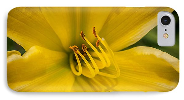 Daylily IPhone Case by Frank Mari