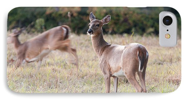 IPhone Case featuring the photograph Deer At Paynes Prairie by Paul Rebmann