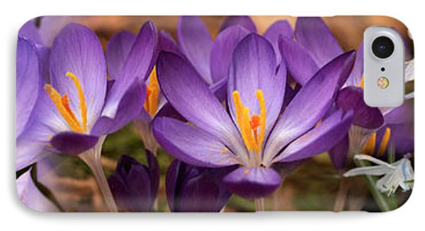 Details Of Early Spring And Crocus IPhone Case by Panoramic Images