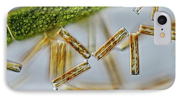 Diatoma Diatoms IPhone Case by Gerd Guenther