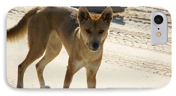 Dingo IPhone Case by Carol Ailles