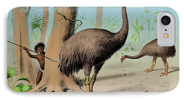 Dinornis, Giant Moa, Cenozoic Bird IPhone Case by Science Source
