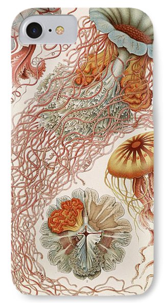 Discomedusae Jellyfish IPhone Case by Library Of Congress
