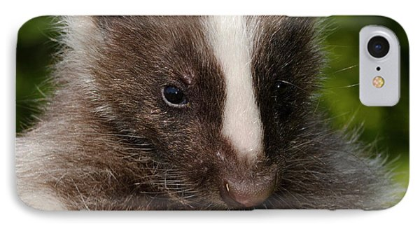 Domestic Striped Skunk IPhone Case by Nigel Downer