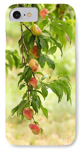 Donut Peaches IPhone Case by Iris Richardson