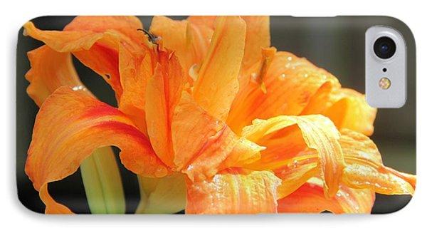Double Orange Daylily IPhone Case