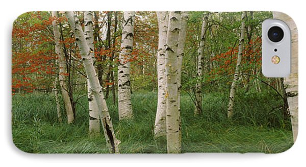 Downy Birch Betula Pubescens Trees IPhone Case by Panoramic Images