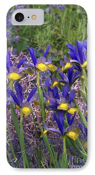 Dutch Iris Iris Xiphium IPhone Case