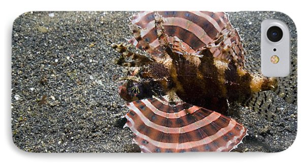 Dwarf Lionfish On The Seabed IPhone Case