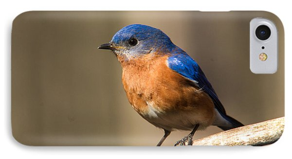 Eastern Bluebird Male 7 Phone Case by Douglas Barnett