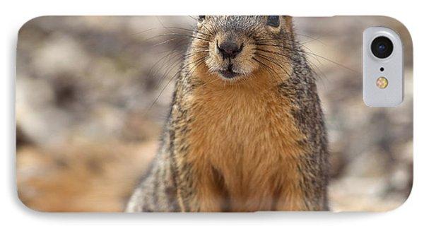 Eastern Fox Squirrel IPhone Case by Brandon Alms