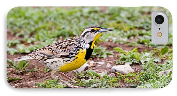 Eastern Meadowlark Sturnella Magna IPhone 7 Case by Gregory G. Dimijian