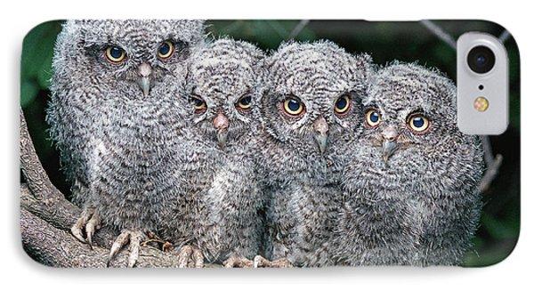 Eastern Screech Owls IPhone Case