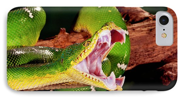 Boa Constrictor iPhone 7 Case - Emerald Tree Boa, Corallus Caninus by David Northcott