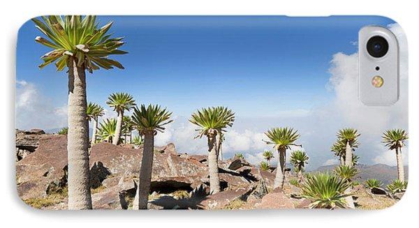 Ethiopian Giant Lobelia (lobelia IPhone Case by Martin Zwick