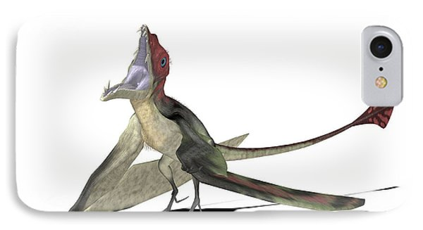 Eudimorphodon Pterosaur IPhone Case by Friedrich Saurer