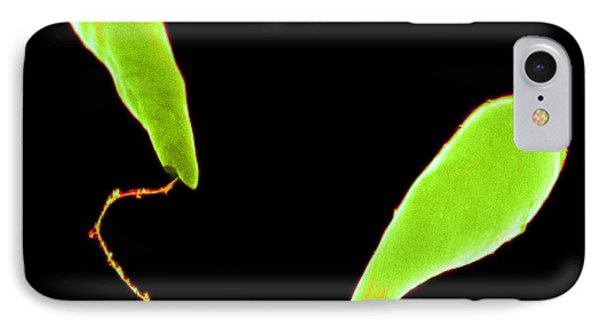Euglena Sem Phone Case by David M. Phillips