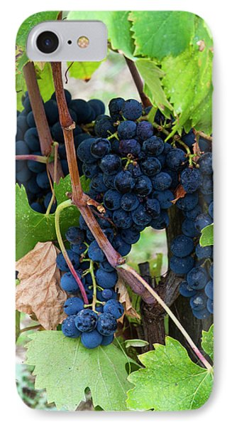 Europe, Italy, Tuscany, Chianti IPhone Case by Terry Eggers
