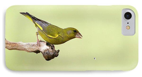 European Greenfinch Carduelis Chloris IPhone Case by Photostock-israel