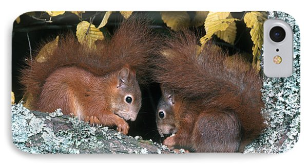 European Red Squirrels Phone Case by Hans Reinhard