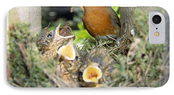 European Robin And Chicks IPhone Case by John Daniels