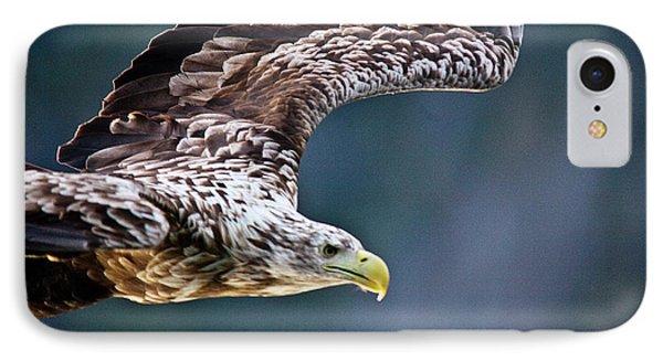 European Sea Eagle Phone Case by Heiko Koehrer-Wagner