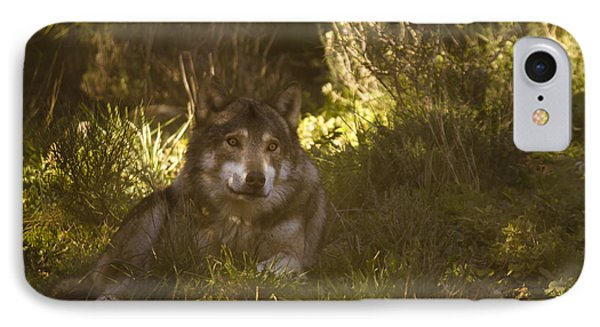European Wolf IPhone Case